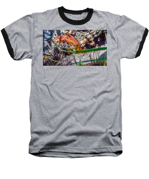 Pantherophis Guttatus Baseball T-Shirt by Rob Sellers