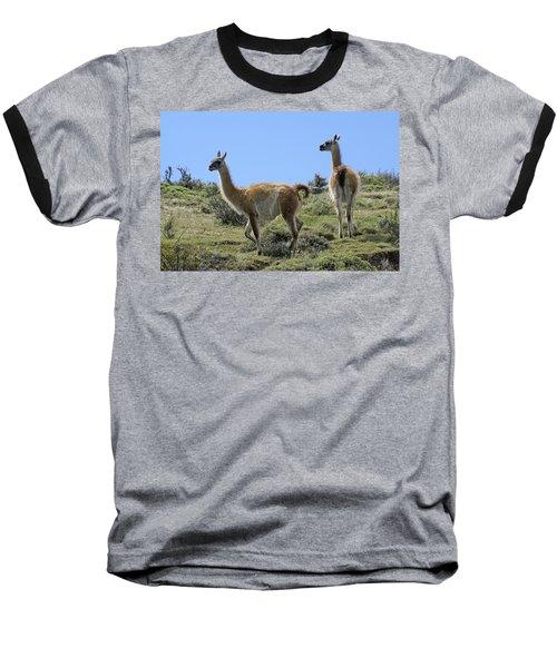 Patagonian Guanacos Baseball T-Shirt by Michele Burgess