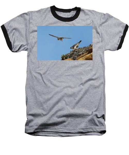 Peregrine Falcons - 6  Baseball T-Shirt