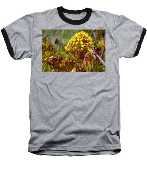 Petal Dome Baseball T-Shirt by Melinda Ledsome