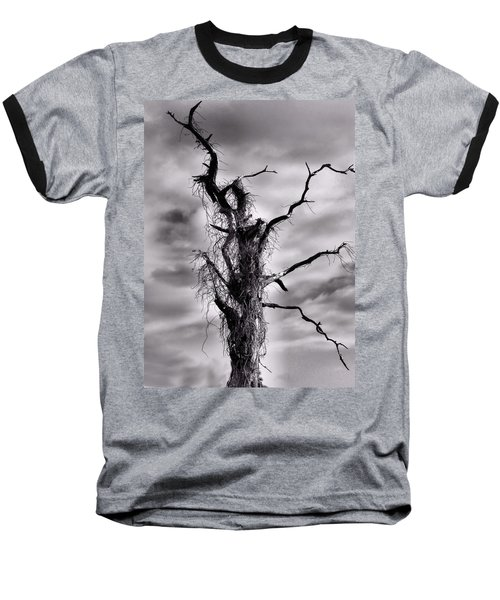 Petrified Tree Baseball T-Shirt