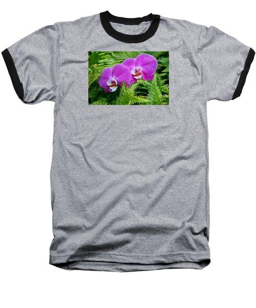 Phalaenopsis Moth Orchids Baseball T-Shirt by Venetia Featherstone-Witty
