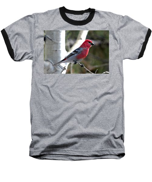 Pine Grosbeak Baseball T-Shirt by Marilyn Burton