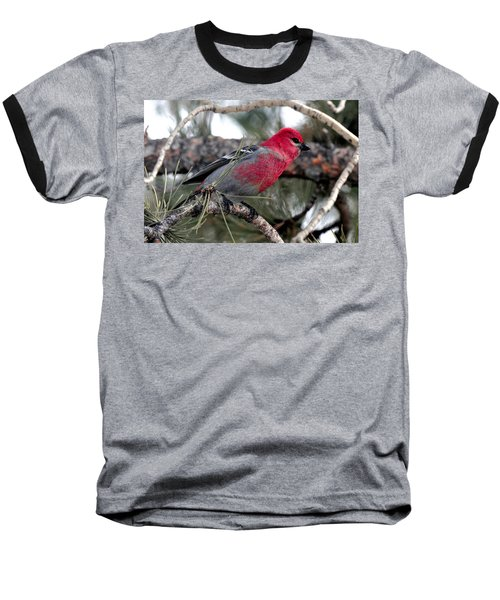 Pine Grosbeak On Ponderosa Pine Tree Baseball T-Shirt by Marilyn Burton