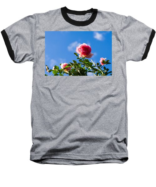 Pink Roses - Featured 3 Baseball T-Shirt
