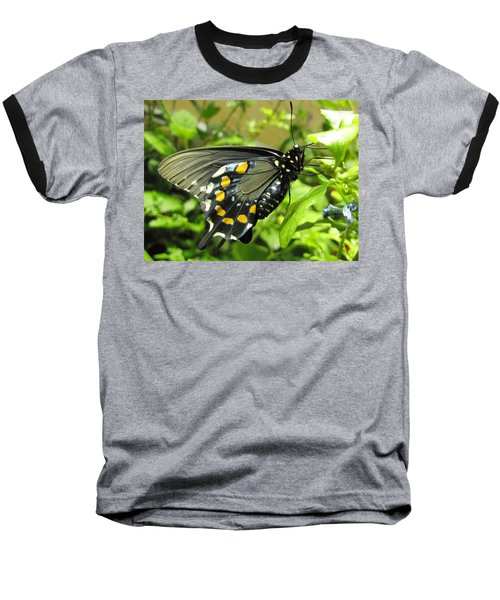 Pipevine Swallowtail Baseball T-Shirt