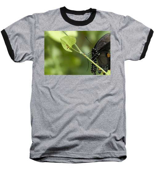 Baseball T-Shirt featuring the photograph Pipevine Swallowtail Mother With Eggs by Meg Rousher