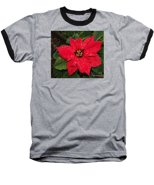 Poinsettia - Frozen In Time Baseball T-Shirt by Philip Bracco