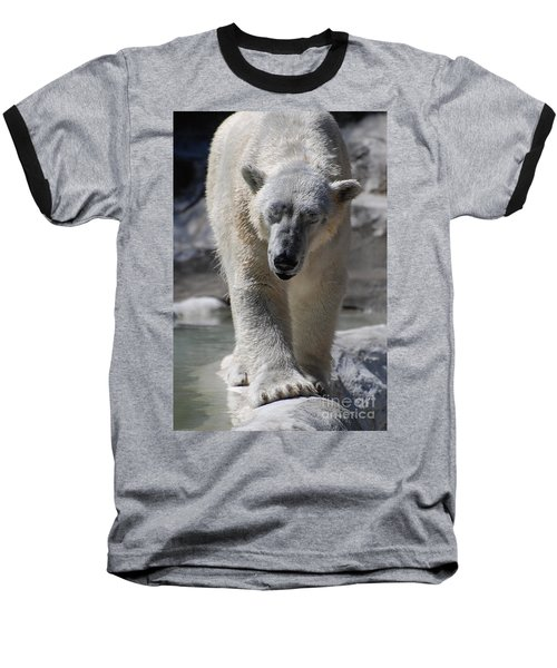 Polar Bear Balance Baseball T-Shirt by DejaVu Designs