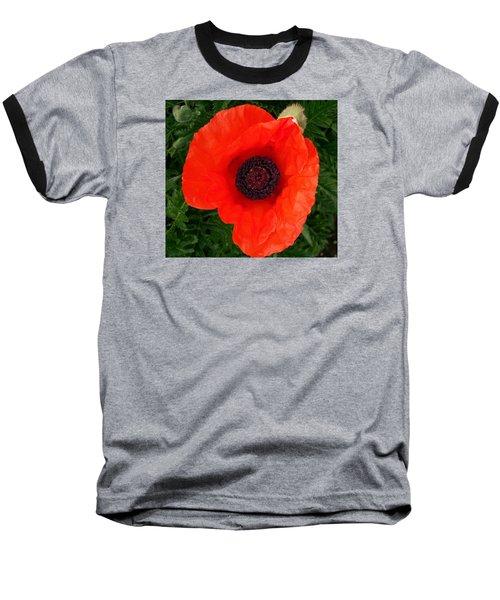 Baseball T-Shirt featuring the photograph Poppy Of Remembrance  by Sharon Duguay