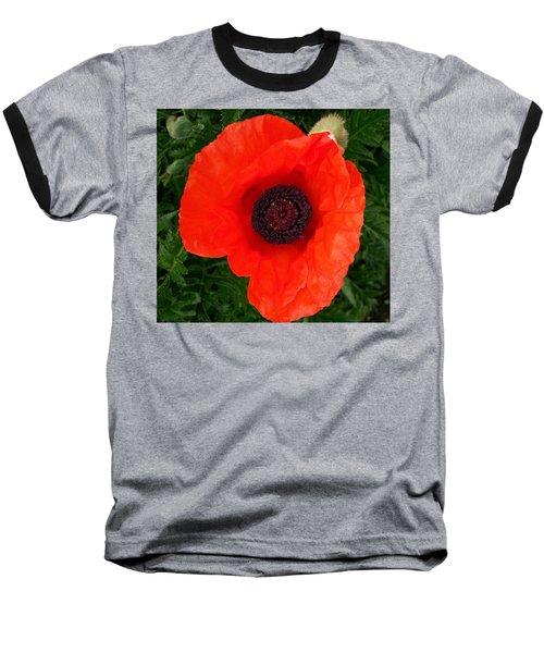 Poppy Of Remembrance  Baseball T-Shirt