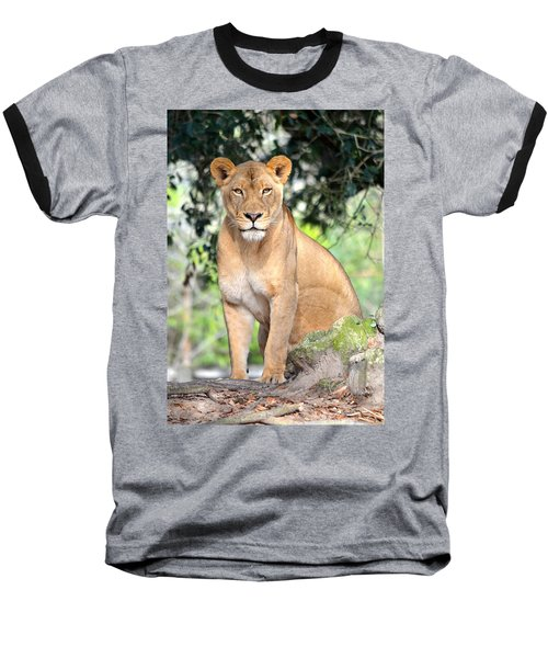 Portrait Of A Proud Lioness Baseball T-Shirt by Richard Bryce and Family