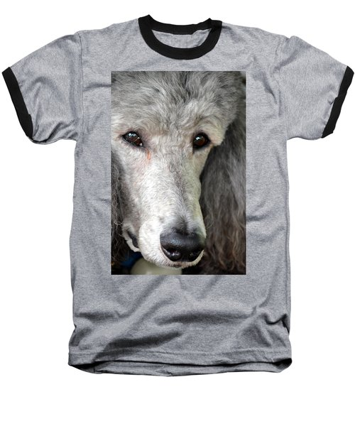 Portrait Of A Silver Poodle Baseball T-Shirt