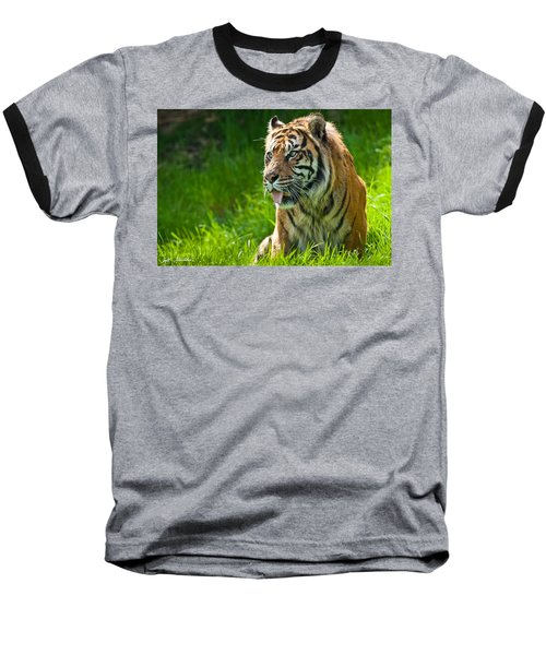 Baseball T-Shirt featuring the photograph Portrait Of A Sumatran Tiger by Jeff Goulden