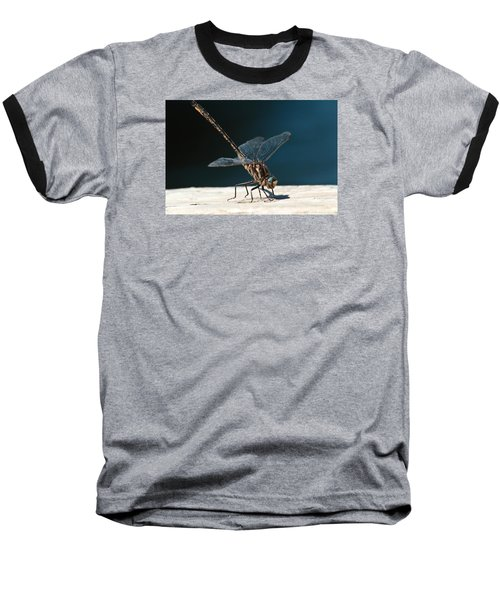 Posing Dragonfly Baseball T-Shirt