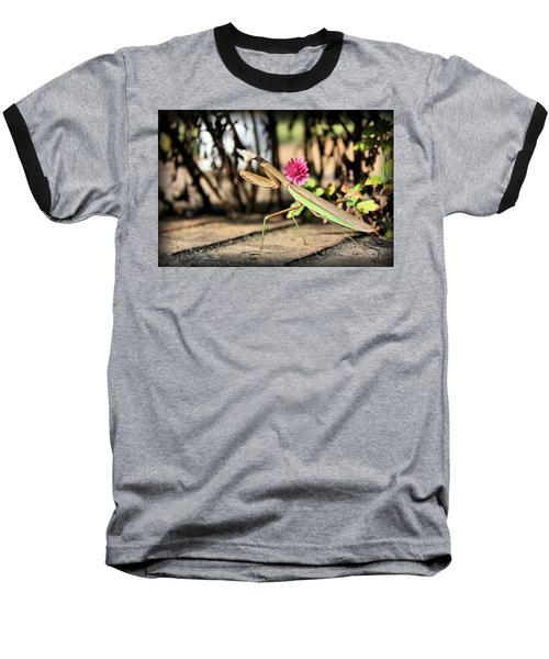 Praying Mantis Baseball T-Shirt by Kristin Elmquist