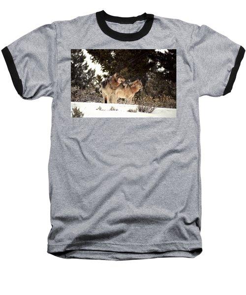 Predators Baseball T-Shirt by Sharon Elliott