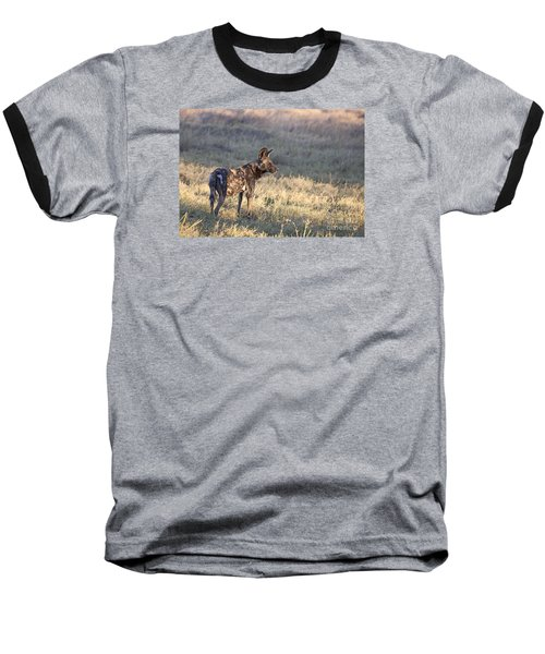Baseball T-Shirt featuring the photograph Pregnant African Wild Dog by Liz Leyden