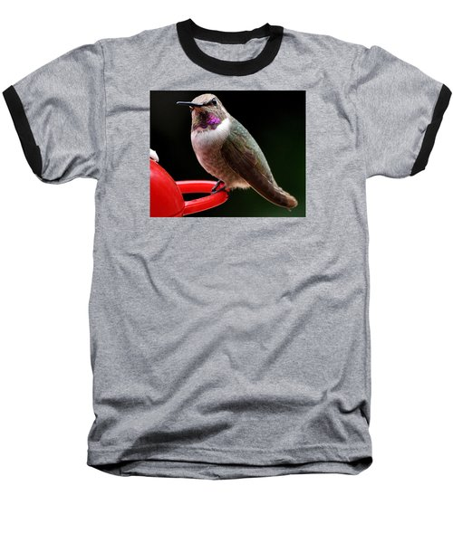Baseball T-Shirt featuring the photograph Pregnant Female Caliope With Purple Throat by Jay Milo