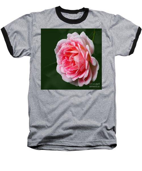 Pretty Pink Rose Baseball T-Shirt