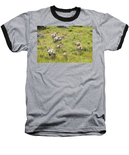 Baseball T-Shirt featuring the photograph Pronghorn Antelope In Lamar Valley by Belinda Greb