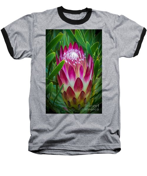 Protea In Pink Baseball T-Shirt by Kate Brown