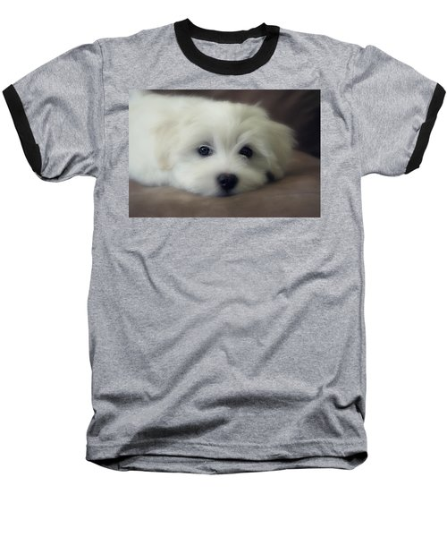 Puppy Eyes Baseball T-Shirt by Melanie Lankford Photography