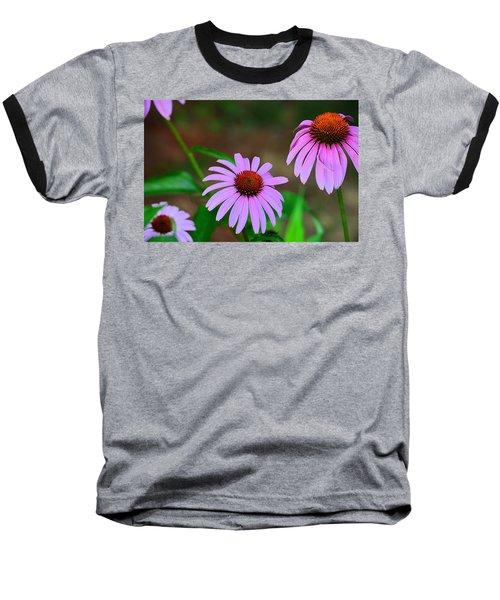 Purple Coneflower - Echinacea Baseball T-Shirt by Kathy Eickenberg