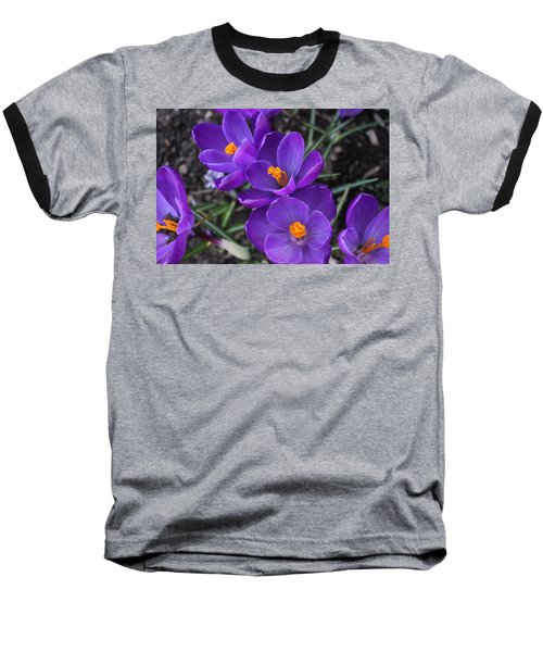 Purple Passion Baseball T-Shirt by Judy Palkimas