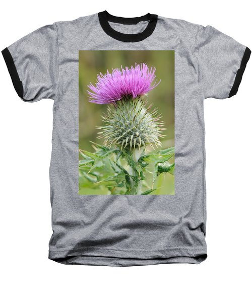 Purple Thistle Baseball T-Shirt by Jeremy Voisey