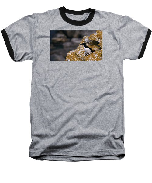 Razorbill Bird Baseball T-Shirt by Dreamland Media