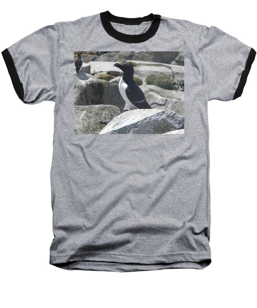 Razorbill Baseball T-Shirt by James Petersen