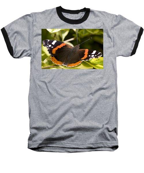 Red Admiral Butterfly Baseball T-Shirt
