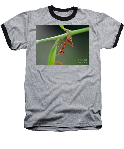 Red Ant Baseball T-Shirt by Michelle Meenawong