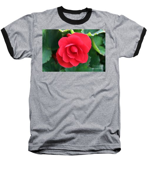 Baseball T-Shirt featuring the photograph Red Begonia by Sergey Lukashin