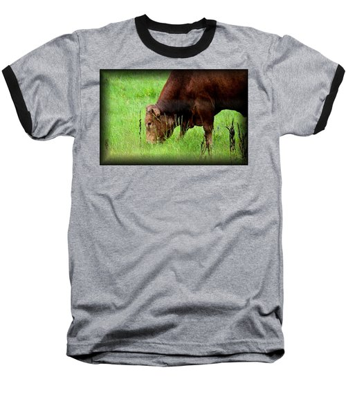 Red Brangus Bull Baseball T-Shirt by Maria Urso
