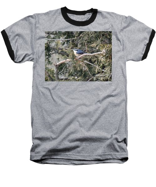 Baseball T-Shirt featuring the photograph Red Breasted Nuthatch by Brenda Brown