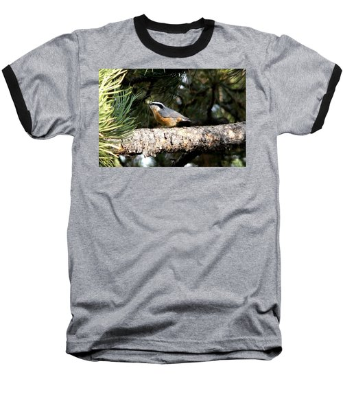 Red-breasted Nuthatch In Pine Tree Baseball T-Shirt