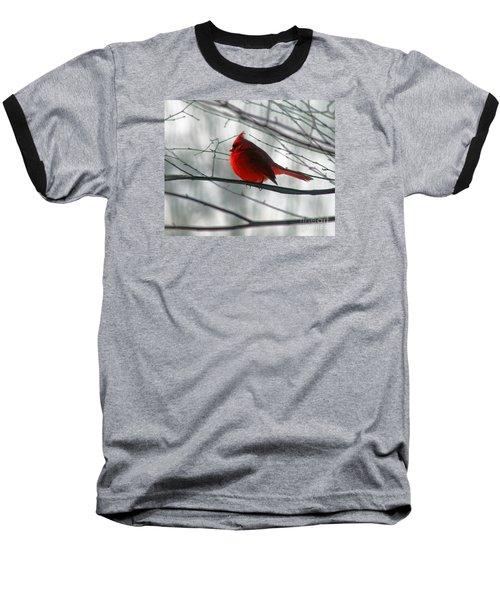 Red Cardinal On Winter Branch  Baseball T-Shirt