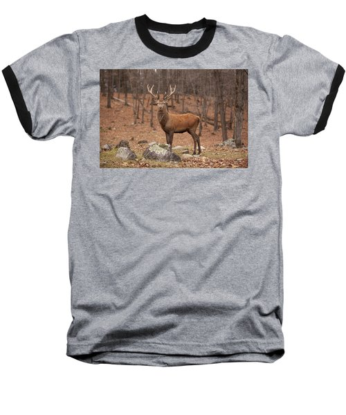 Red Deer Baseball T-Shirt by Eunice Gibb