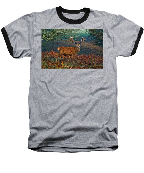 Red Deer Stag In Woodland Baseball T-Shirt by Scott Carruthers