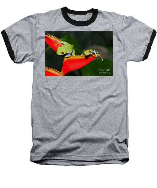 Red Eyed Tree Frogs Baseball T-Shirt by Bob Hislop