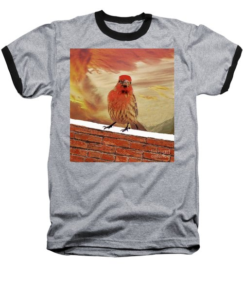 Red Finch On Red Brick Baseball T-Shirt by Janette Boyd