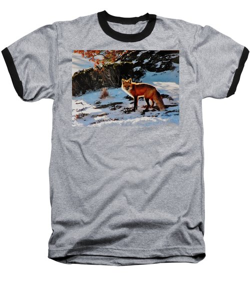 Baseball T-Shirt featuring the photograph Red Fox In Winter by Diane Alexander