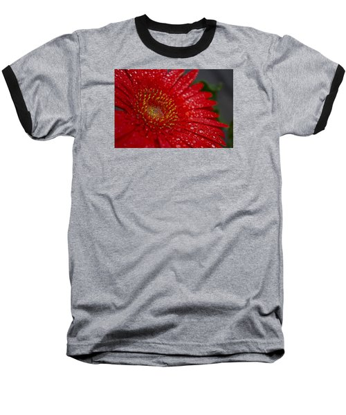 Red Gerber In The Rain Baseball T-Shirt