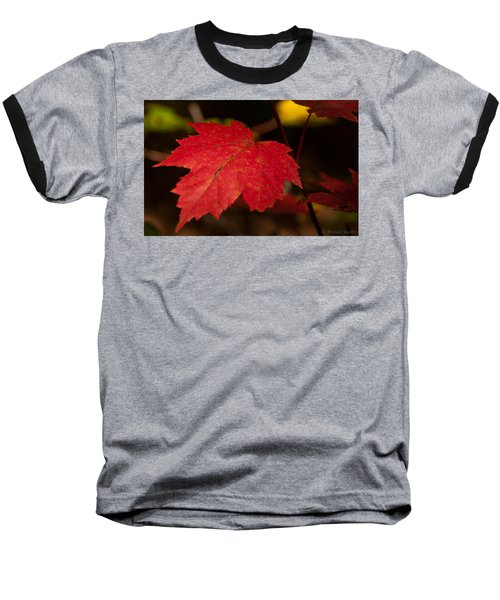 Red Maple Leaf In Fall Baseball T-Shirt by Brenda Jacobs