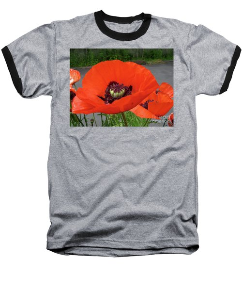 Red Poppy Baseball T-Shirt by Barbara Griffin