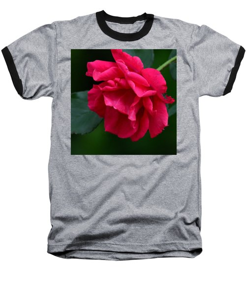 Red Rose 2013 Baseball T-Shirt by Maria Urso
