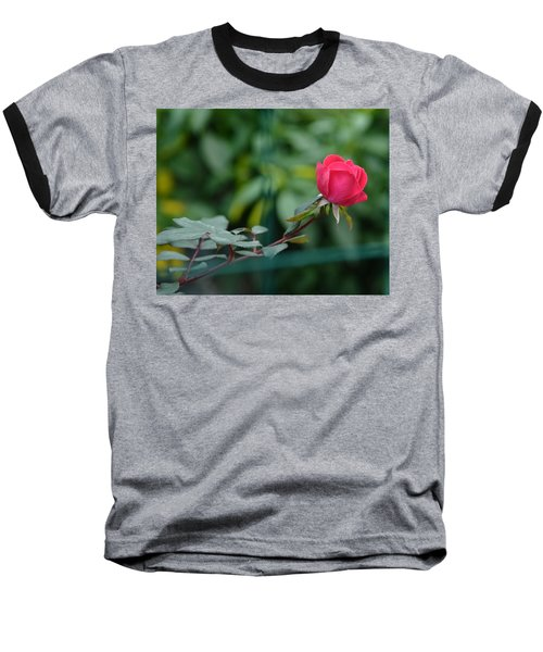 Baseball T-Shirt featuring the photograph Red Rose I by Lisa Phillips