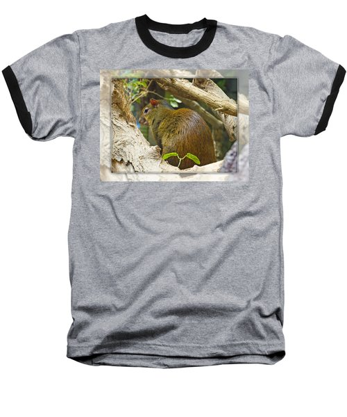 Red-rumped Agouti Baseball T-Shirt